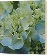 Hydrangea 2 Wood Print