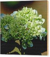 Hydrangea 4 Wood Print