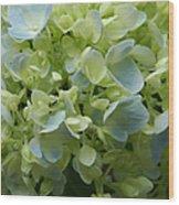 Hydrangea 5 Wood Print