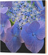 Hydrangea Blossom Macro Wood Print