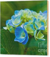 Hydrangea Bouquet Wood Print