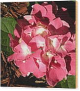 Hydrangea Flower Wood Print