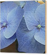 Hydrangea Flower Set Wood Print