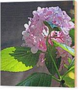 Hydrangea Heaven Wood Print by Suzanne Gaff
