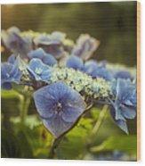 Hydrangea In Fading Light Wood Print
