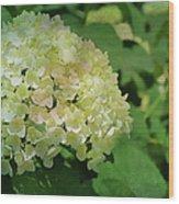 Hydrangea In Soft Light Wood Print