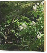 Hydrangea Path Wood Print