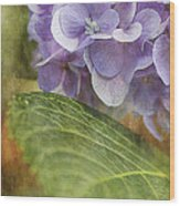 Hydrangea Portrait Wood Print
