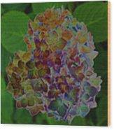 Hydrangea Solorized Wood Print