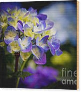 Purple Blue Hydrangea, Corona Del Mar California Wood Print