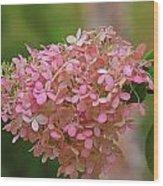 Hydrangea Valentine Wood Print