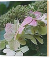 Hydrangea White And Pink I Wood Print