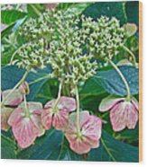 Hydrangea With A New Look Wood Print