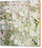 Hydrangeas 3 Wood Print