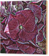 Hydrangeas In Rich Rose Color Wood Print