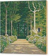 Hydrangeas On A Garden Path Wood Print