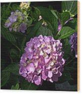 Hydrangeas Vi Wood Print