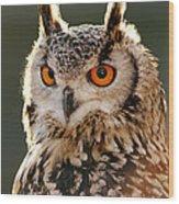Hypnoteyes  Eurasian Eagle Owl Wood Print