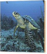 I Am A Proud Hawksbill Turtle Wood Print