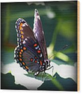 I Butterfly Wood Print