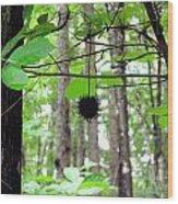 I Hang Alone Wood Print