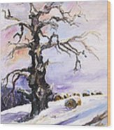 I Have Got Stories To Tell Old Oak Tree In Mecklenburg Germany Wood Print