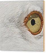 I Have My Eye On You Wood Print