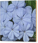 I Love Blue Flowers Wood Print