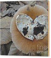 I Love Mushrooms Wood Print