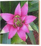 Pink And Beautiful  Wood Print