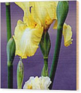 I Only Have Iris For You Wood Print by Kathy  White