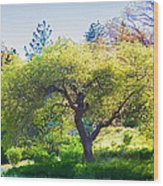 I See Soul And Expression - Julian California Oakscape Wood Print