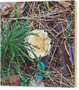 I Think I Am A Fungi Wood Print
