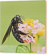 I Want Pollen Wood Print