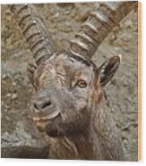 Ibex Pictures 40 Wood Print
