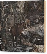 Ibex Pictures 86 Wood Print