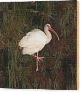 Ibis In The Cypress Wood Print