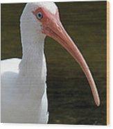Ibis Portrait Wood Print