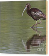Ibis Reflection Wood Print