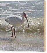 Ibis Walking The Beach Wood Print