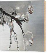 Ice And Snow-5739 Wood Print