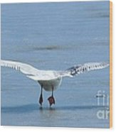 A Gull Performing Ice Ballet Wood Print