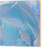Ice Blue Amaryllis Abstract Wood Print