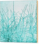 Ice Branches Wood Print