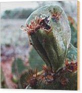 Ice Cactus Wood Print