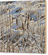 Ice Coated Bullrushes Wood Print
