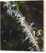 Ice Crystals In Morning Sun Wood Print