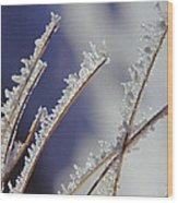 Ice Crystals On Fireweed Fairbanks  Alaska By Pat Hathaway 1969 Wood Print