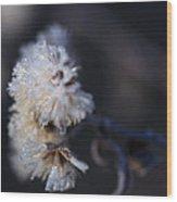 Ice Flowers Wood Print