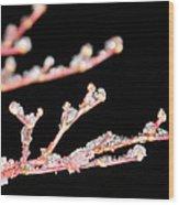 Ice On A Tree Wood Print